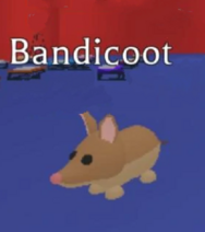 ABandicoot