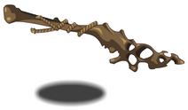 A Dino Bone