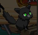 BlackKitten