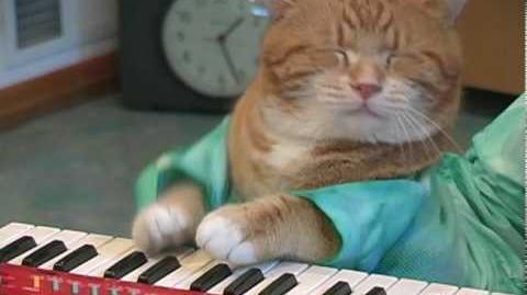 Keyboard Cat REINCARNATED!
