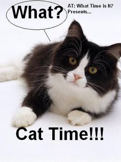 Cat Time