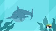 Shark-mouse