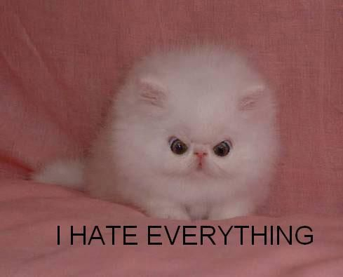 Image funny cat pictures 231g adventure time wiki fandom filefunny cat pictures 231g voltagebd Gallery