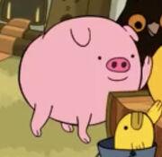 Petting Pig