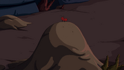 S7e32 Red ant on anthill
