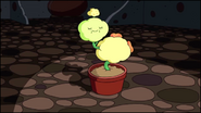 S1e22 Dimpleplant6