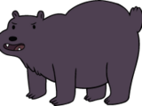 Bears (species)