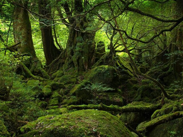 File:The old woods.jpg