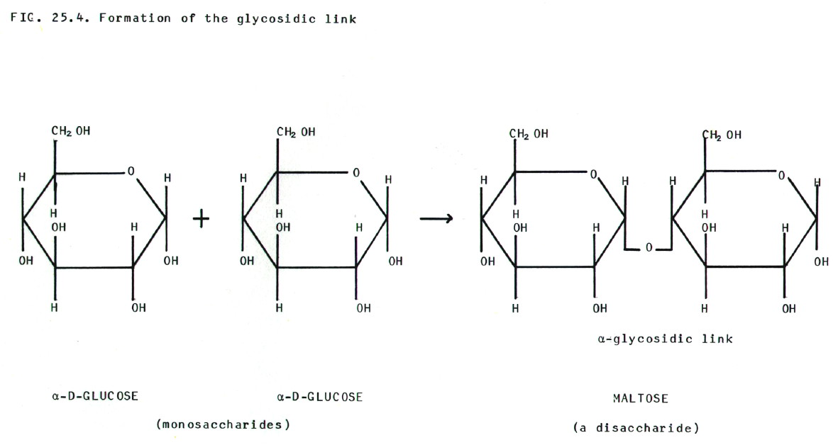 1 1 the molecular basis of life aecbio11 wiki fandom. Black Bedroom Furniture Sets. Home Design Ideas