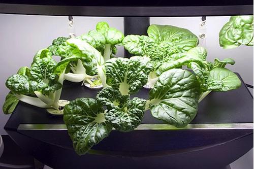 Aerogarden Gardeners Wiki