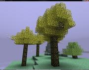 Golden oak tree 1