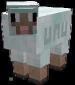 Display Sheepuff