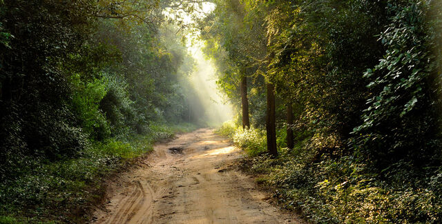 File:Jungle-road.jpg