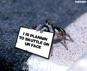 Spidercute