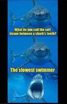 Shark-soft-tissue