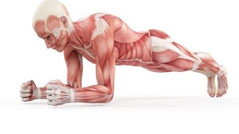 This Happens to Your Stomach Fat When You Plank - 6 Good Reasons Why You Should Do Plank Daily