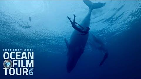 International OCEAN FILM TOUR Volume 6 Official Trailer-0