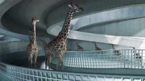 High Diving Giraffes