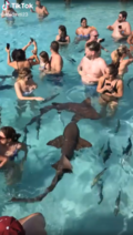Sharks-in-pool