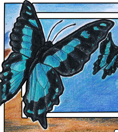 File:Butterfly1.png