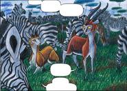 Zebras1