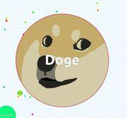Dogeeee