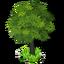 Weurope tree