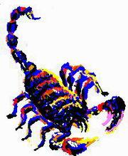 Scorpion 20090102