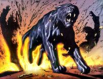 Panther (4)