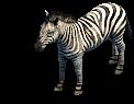 Zebra prev ao2de