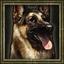 Aoe3 dog