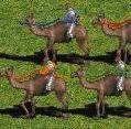 Camelriders.jpg