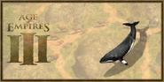 Minke Whale history portrait