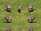 Heavy Camel