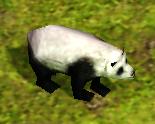 PandaAoM