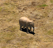 AoE2 elephant
