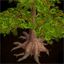 Tamarisk Tree Icon