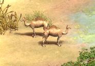 DE Saladin Camels