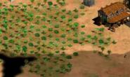 Enemy Island tree