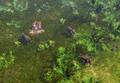 Borneo Jungle.png