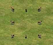 Alfred the alpaca