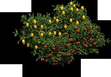 Foragebushes prev aoe2