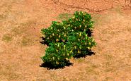 Fruitbush