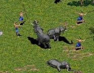 Elephants hunted aoe 1
