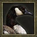 Canada goose icon AOE III