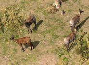 Musk Deer Mongolia