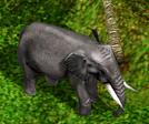 IndianElephant