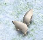 PolarBearAOM