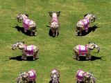 War Elephant (Age of Empires II)