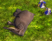 Hunted elephant
